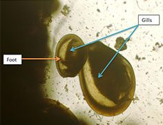 Larval Sampling Image